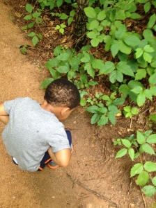 Here carter found a small green frog. I was thrilled at his quiet, gentle examination of the creature.